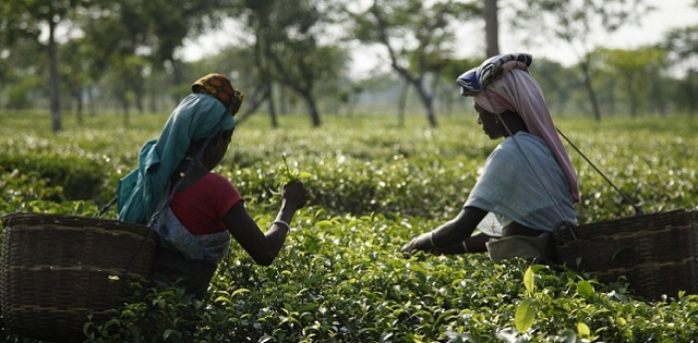 Assam to launch scheme to benefit pregnant women in tea gardens